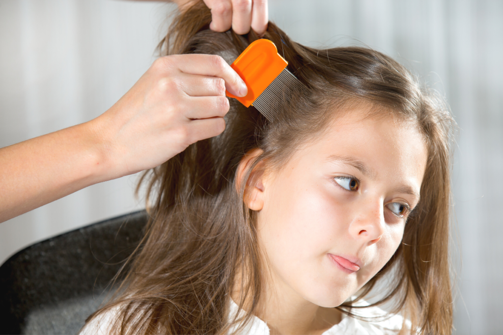 Little girl gets her hair combed for head lice.