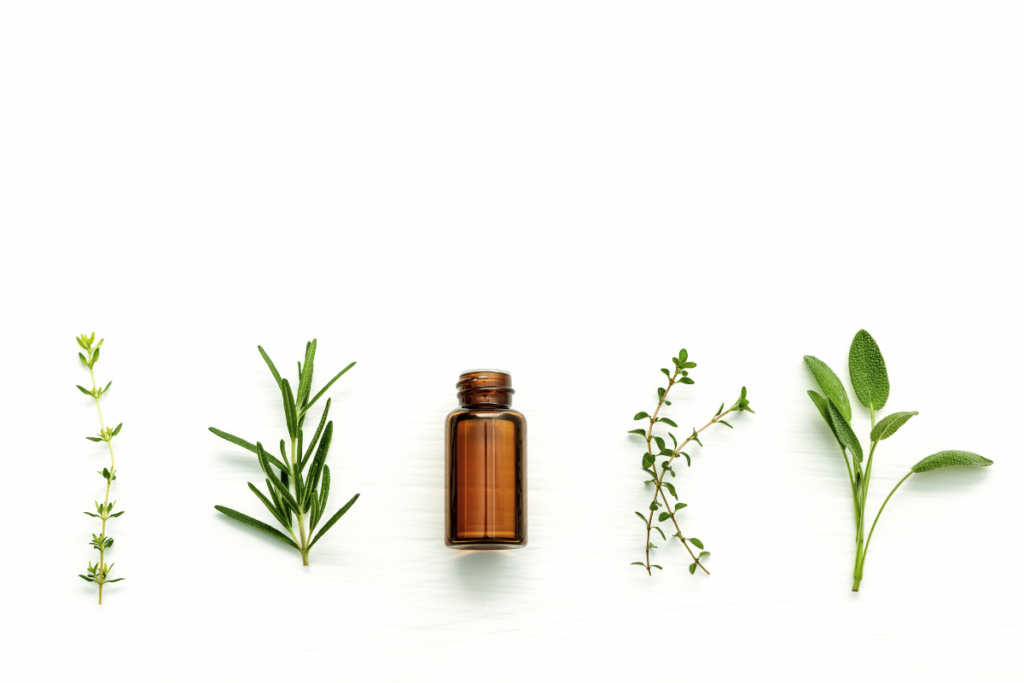 Tea tree oil sits next to different herbs against a white background.