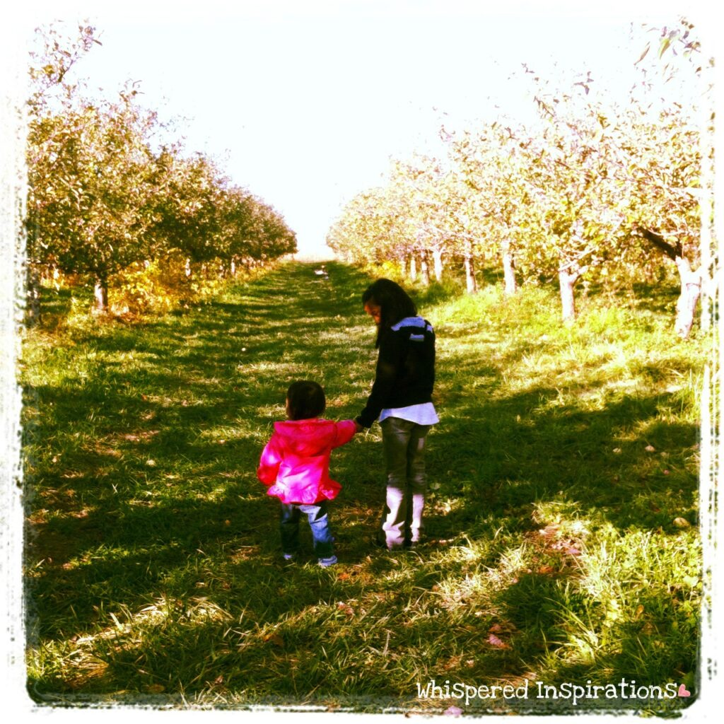 Two little girls walk in an apple orchard holding hands.
