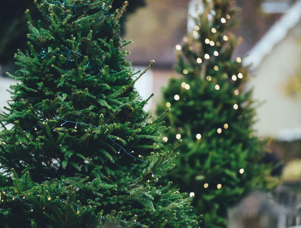 Lit Christmas trees without decorations.
