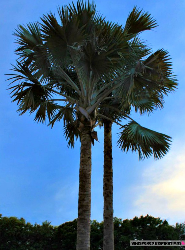 Florida: All Fun In The Sun – The State With Everything!