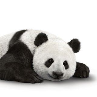 It's Panda-monium with @TELUS and the World Wildlife Fund! #WWF