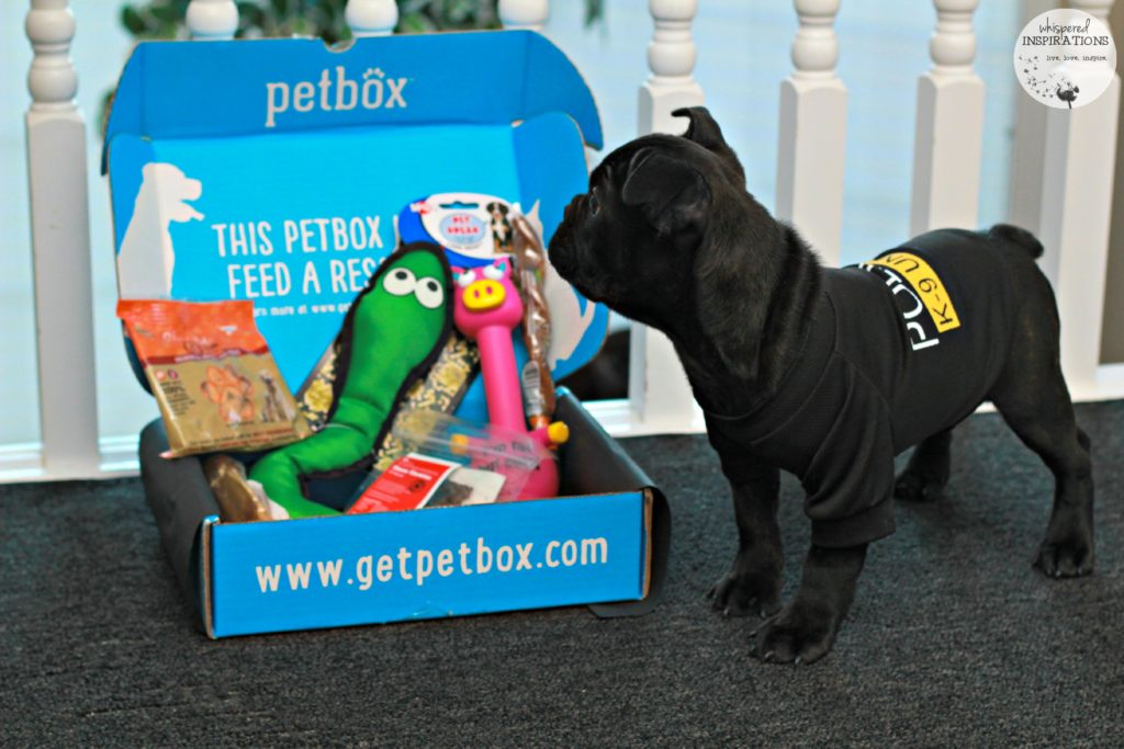 Unboxing the January PetBox: Natural Products, Fun Toys and Personalized Goodies! #PetBox
