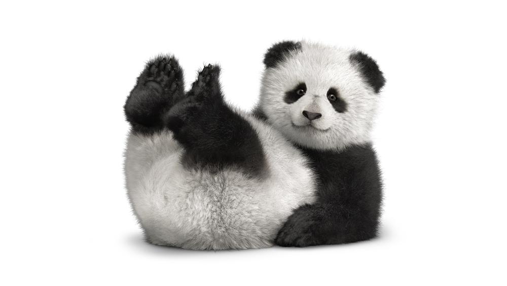 Panda_BK_FtHrz_Panda_Legs_Up_tm