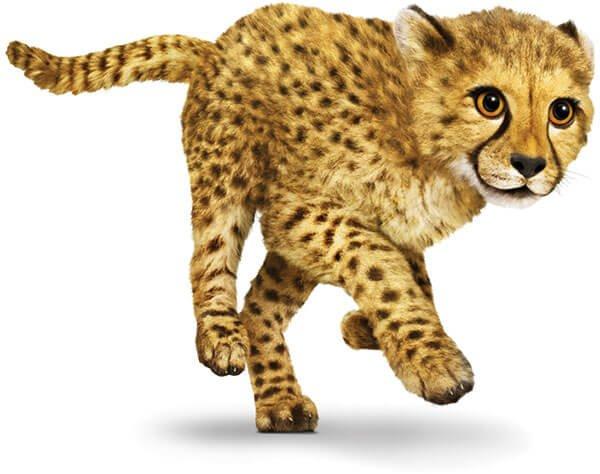 cheetah-running-fast