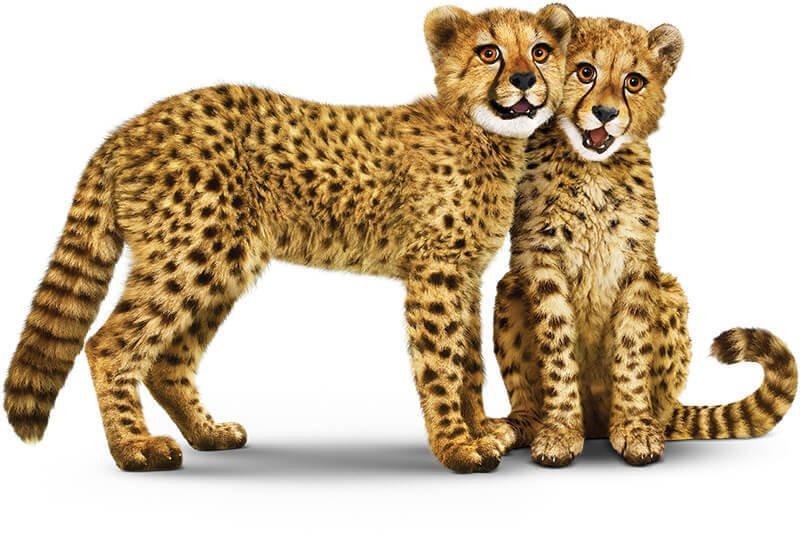 duo-cheetah-nuzzling