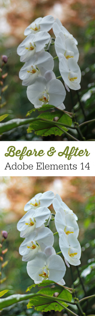 Before and After-Adobe Elements 14