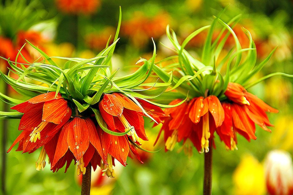 Top 3 Places in the World to See Flowers in the Spring! #travel