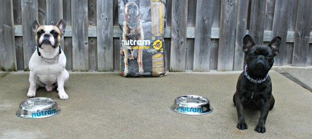 We Are Taking the Nutram Optimum Transition Challenge w/ Lincoln & Maverick! #NutramOTC