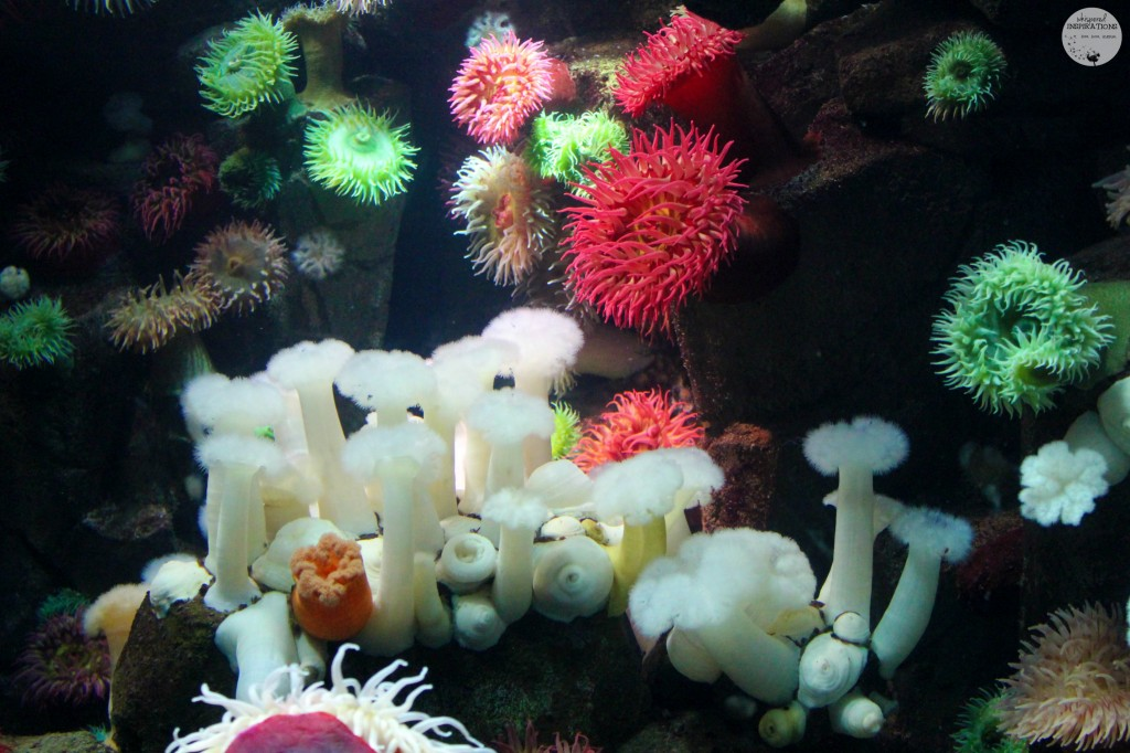 Ripleys-Aquarium-of-Canada-08