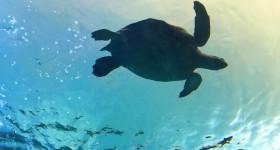 Ripleys-Aquarium-of-Canada-31