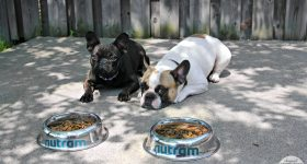 Lincoln & Maverick Rocked the Nutram Optimum Transition Challenge! #NutramOTC