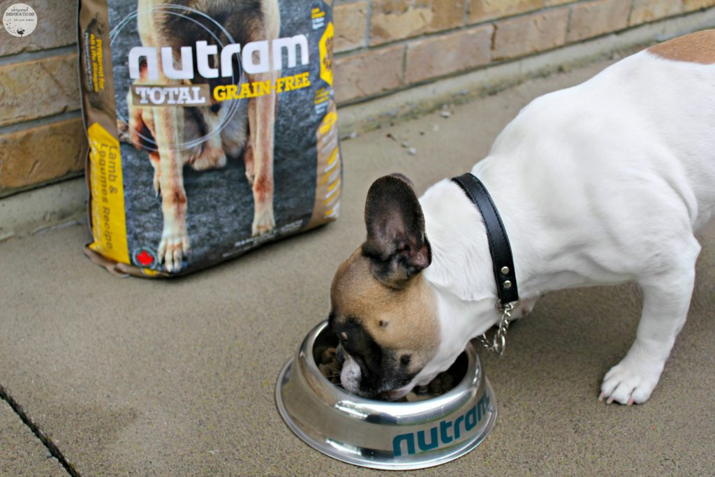 We Rocked the Nutram Optimum Transition Challenge! #NutramOTC