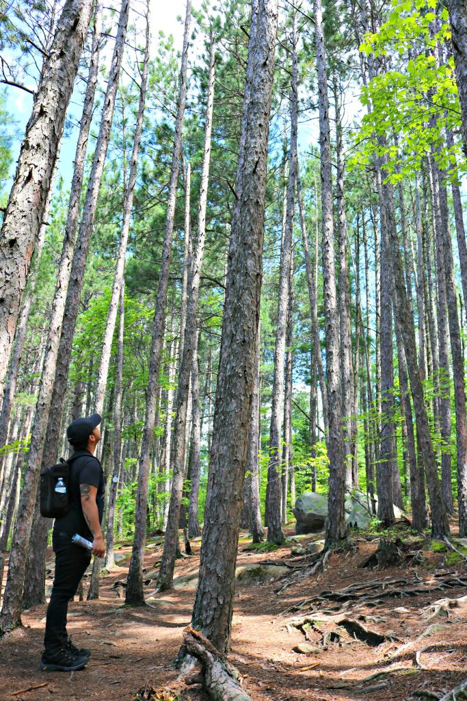 Darasak looks high at the height of the trees at a nearby trail.