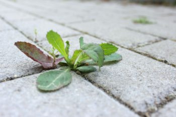 The Most Effective Ways to Control Pesky Weeds!