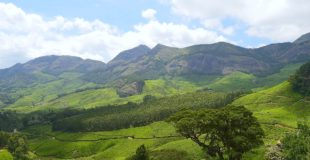 Must-Visit Places in Munnar!