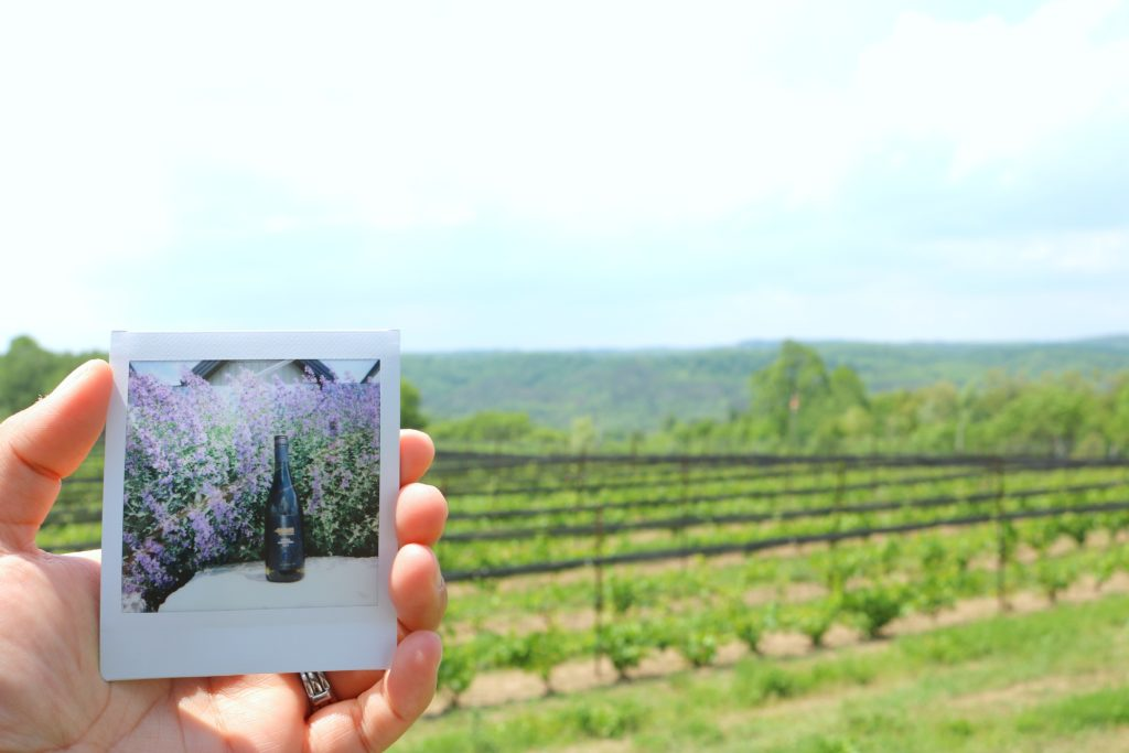 A hand holds an Instax picture of the Vidal Adamo wine against a bed of lavender, the vineyard and hills are behind it.