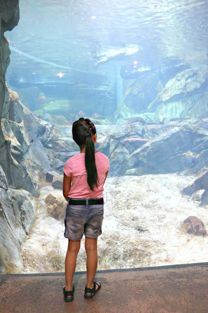 A little girl watches the otters in the exhibit at the Georgia Aquarium.
