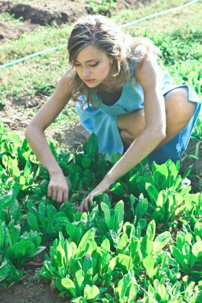 Woman in a blue dress gardens in her backyard.