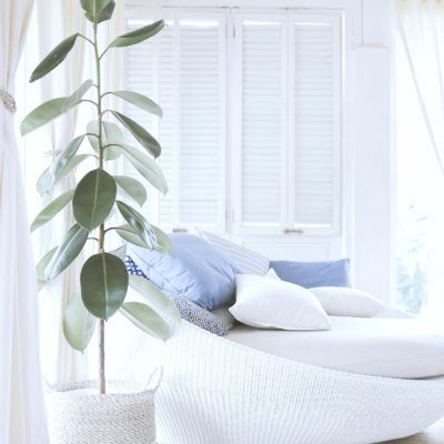 A gorgeous day room with a beautiful house plant next to a large couch.