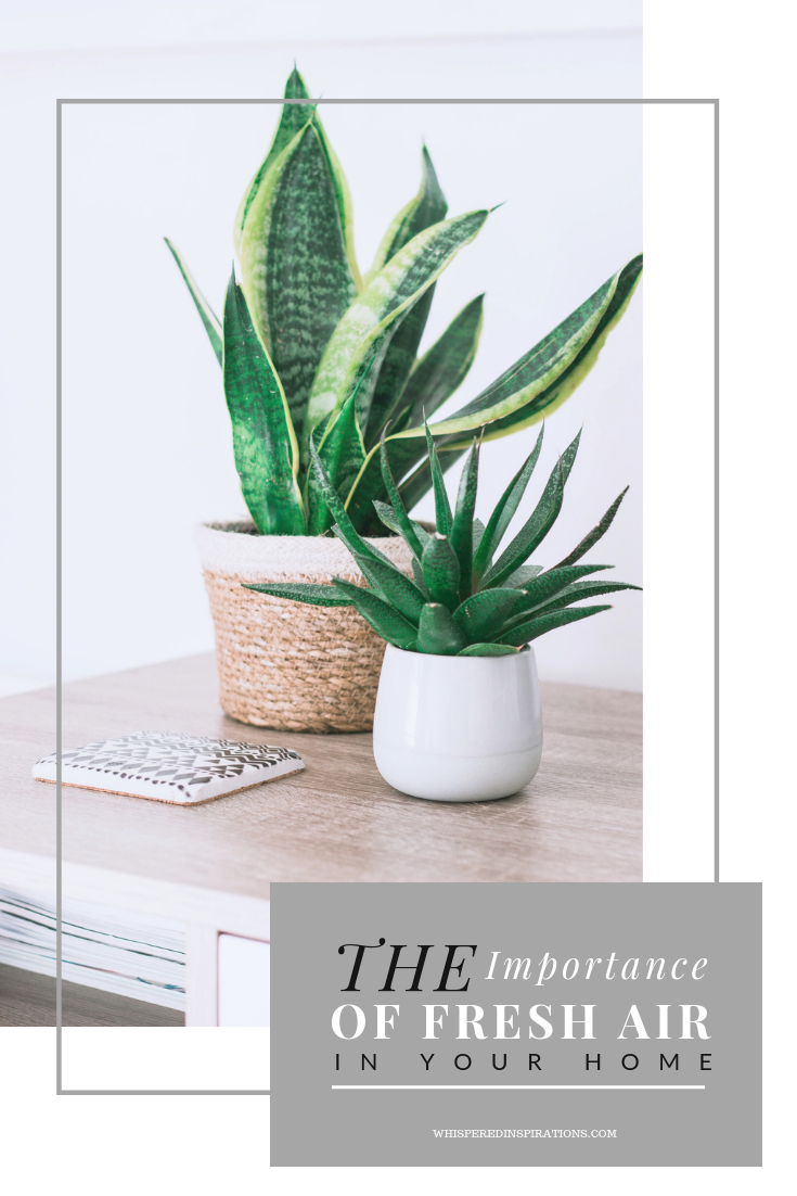 "A rattle snake plant and succulent sit on a table in a beautiful home. Below is a banner that reads, ""The benefits of fresh air in the home."""