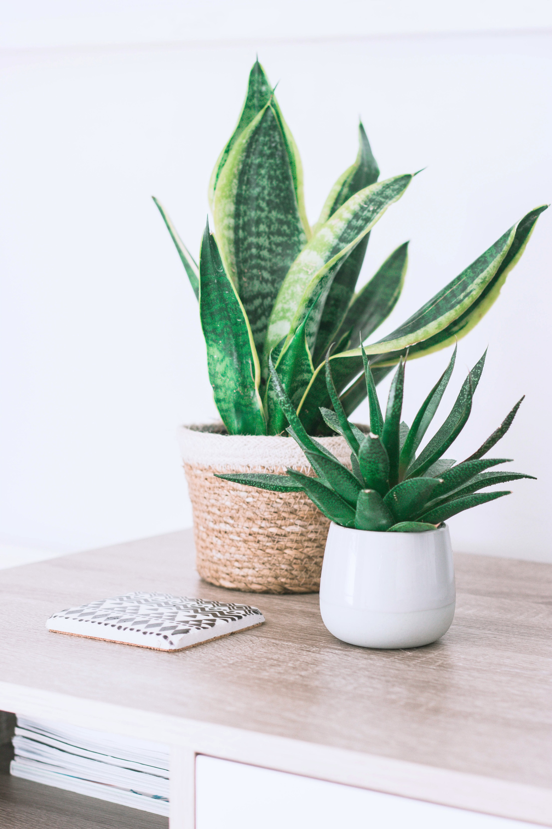 A rattle snake plant and succulent sit on a table in a beautiful home.