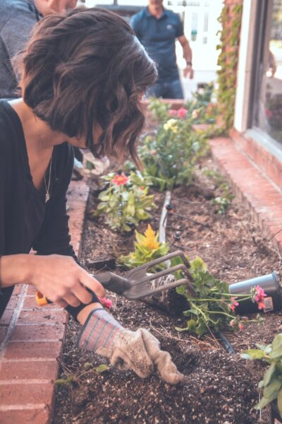 Woman plants perennial flowers in landscaping. She is using a gardening tool.