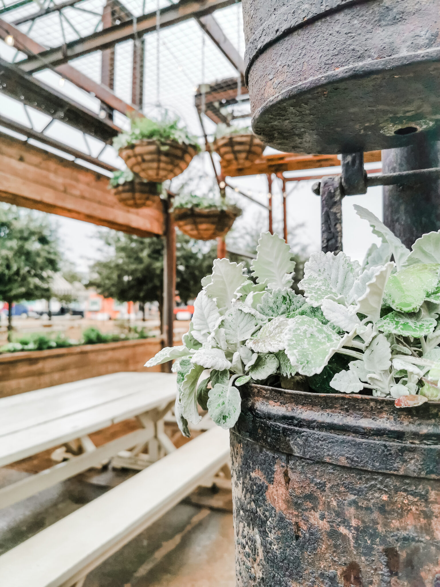 Old and rustic planter pots with greenery. A picnic dining area in Magnolia Market.