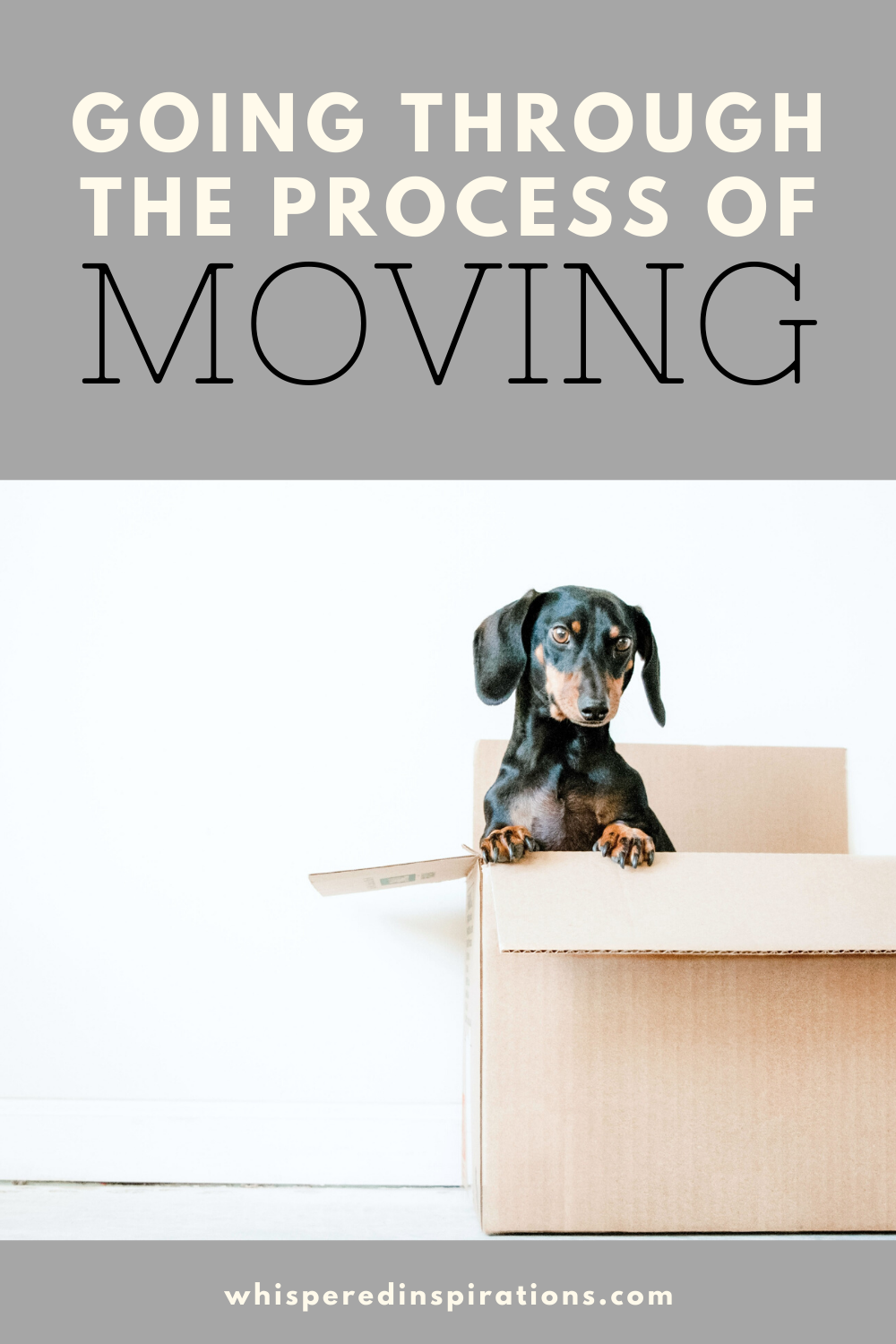"""Dog sitting in a box while his owners plan on moving out. A banner reads, """"Going through the process of moving."""""""