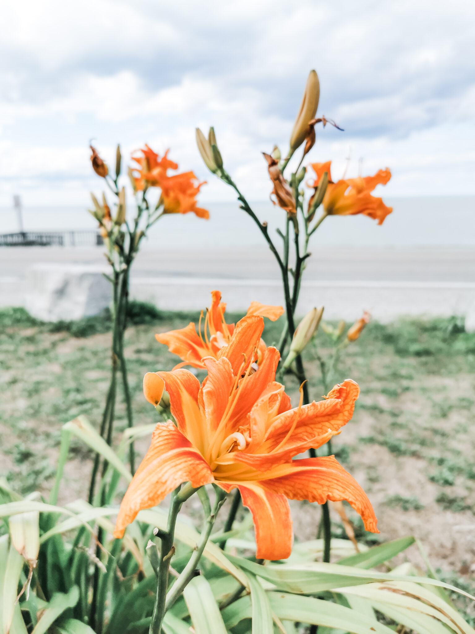 Lily growing next to Lake Huron. During our roadtrip with ProClip USA Jeep accessories.