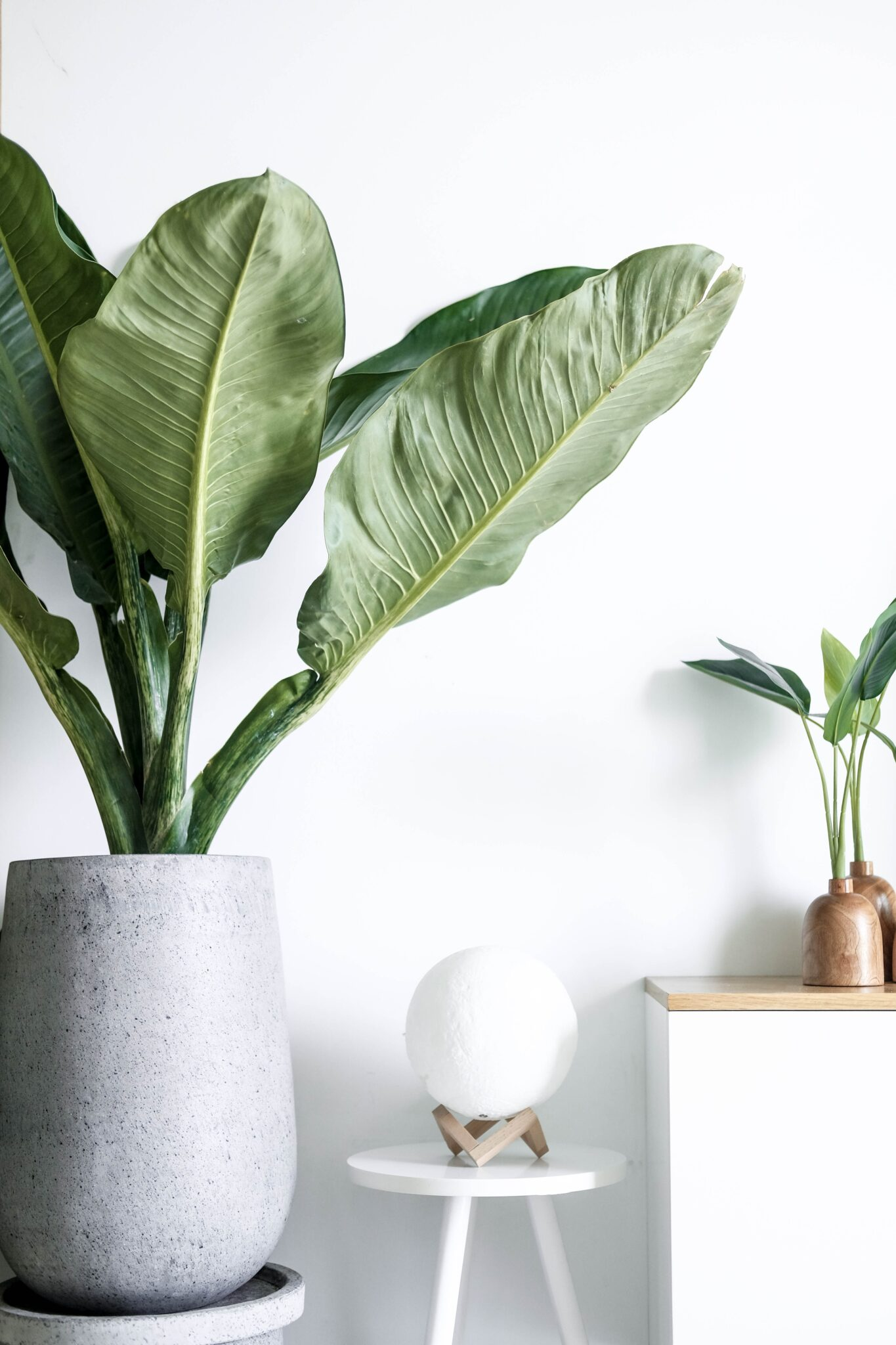 Shelves with beautiful neutral decor and lush green plants. This article touches upon small changes that can make a big difference to your home.