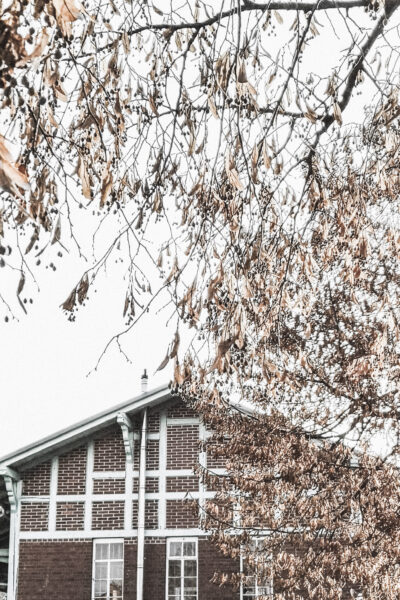 A tree surrounds and borders a home during the winter.