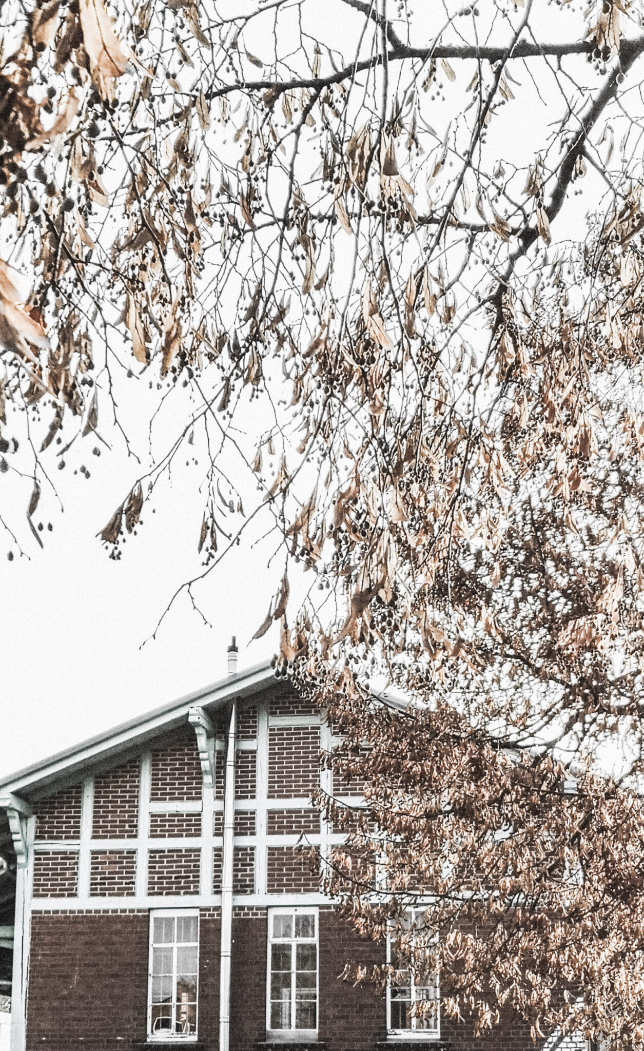 A tree surrounds and borders a home during the winter. This article explains how to get your house ready for winter.