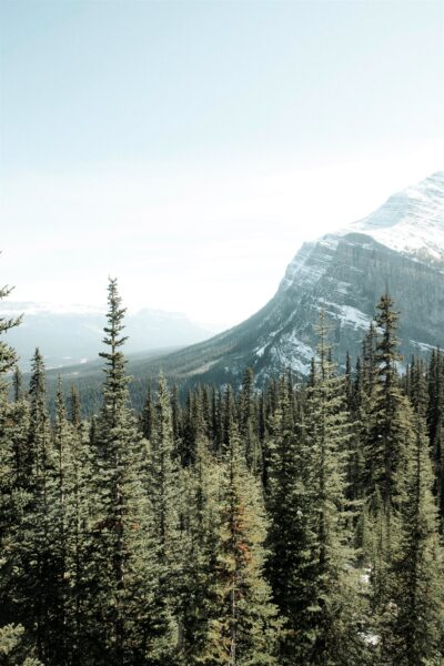 A beautiful Canadian landscape with a dense forest and a snow-covered mountain in the distance. This article covers reasons to visit or move to Canada.